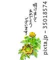 福寿草 花 植物のイラスト 35018574