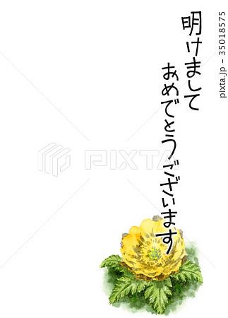 福寿草の賀詞入り年賀ハガキ素材 35018575