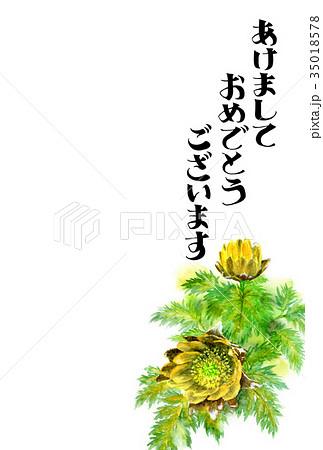 福寿草の賀詞入り年賀ハガキ素材 35018578