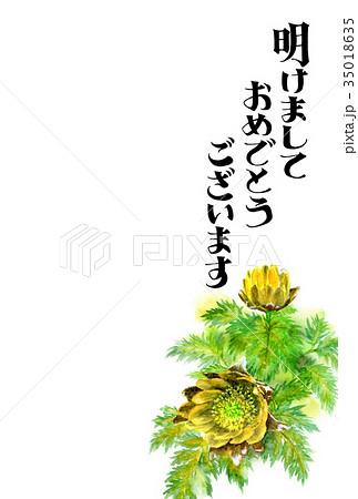 福寿草の賀詞入り年賀ハガキ素材 35018635