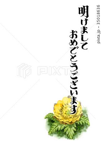 福寿草の賀詞入り年賀ハガキ素材 35018636