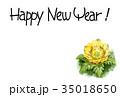 福寿草 花 植物のイラスト 35018650