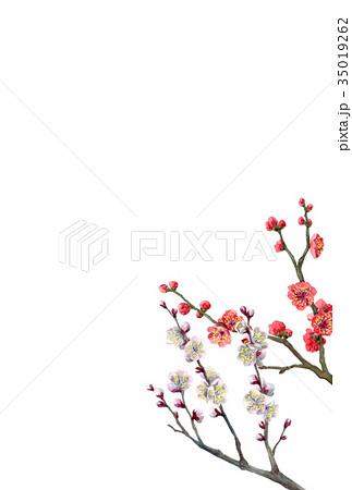 紅白梅の年賀ハガキ素材 35019262