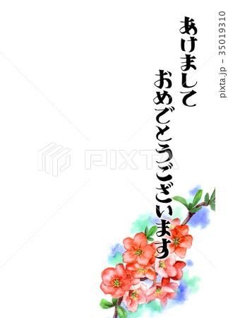 木瓜の花の賀詞入り年賀ハガキ素材 35019310