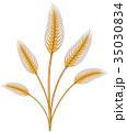 むぎ ムギ 小麦のイラスト 35030834