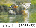 カイツブリ 水彩画 35033455