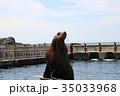 おたる水族館、トド 35033968