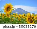 ひまわり 向日葵 向日葵畑の写真 35038279
