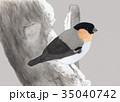 鳥の絵 ウソ 35040742