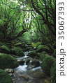 屋久島 白谷雲水峡 35067393