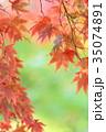紅葉 カエデ 葉の写真 35074891