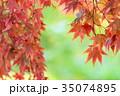 紅葉 カエデ 葉の写真 35074895