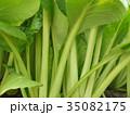小松菜 35082175