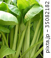 小松菜 35082182