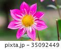 花 フローラル お花の写真 35092449