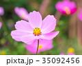 花 フローラル お花の写真 35092456