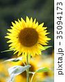 ひまわり 向日葵 夏の写真 35094173