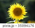 ひまわり 向日葵 夏の写真 35094176