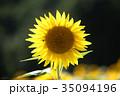 ひまわり 向日葵 夏の写真 35094196