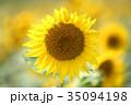 ひまわり 35094198