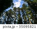 神社から眺める青空、立ち並ぶ木々 35095821