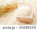 米 白米 コシヒカリの写真 35096550