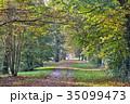 Beautiful beech canopy road 35099473