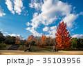三重県民の森 フウの木 遊具の写真 35103956