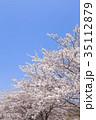 花 桜 ソメイヨシノの写真 35112879
