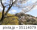 吉野山 桜 春の写真 35114079