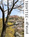 吉野山 桜 春の写真 35114081