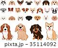 いろいろな犬種のイヌ セット 35114092