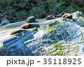ニュージーランド フィヨルドランド国立公園 ミルフォードサウンド シール・ロック 35118925