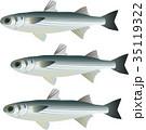ボラ 魚 海水魚のイラスト 35119322