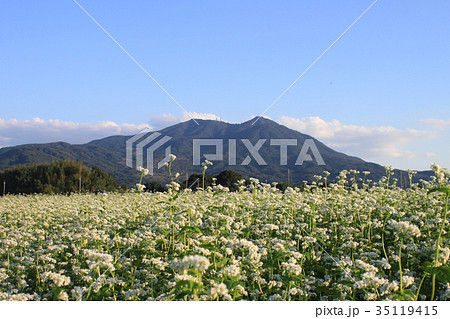 筑波山とそば畑 35119415