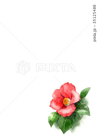 水彩で描いた赤い椿の年賀ハガキ素材 35125486