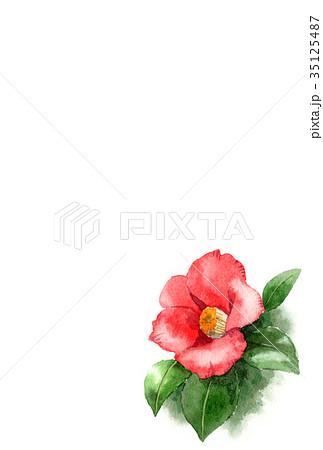 水彩で描いた赤い椿の年賀ハガキ素材 35125487