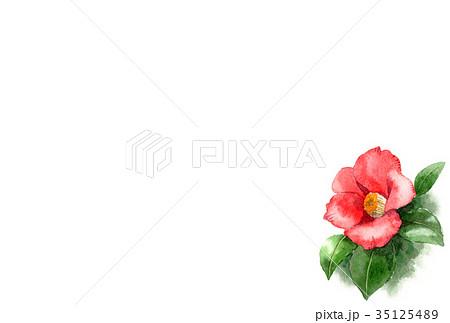 水彩で描いた赤い椿の年賀ハガキ素材 35125489