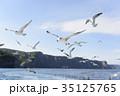 船と並走するウミネコ 35125765