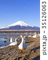 富士山 白鳥 山中湖の写真 35126063