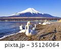 富士山 白鳥 山中湖の写真 35126064