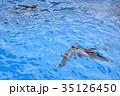 八景島シーパラダイス 35126450