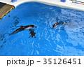八景島シーパラダイス 35126451