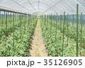 トマト ハウス 野菜の写真 35126905