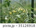 トマト 野菜 ミニトマトの写真 35126918