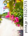 ブーゲンビリア 離島 竹富島の写真 35127375