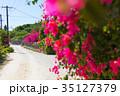 ブーゲンビリア 離島 竹富島の写真 35127379
