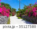 ブーゲンビリア 離島 竹富島の写真 35127380
