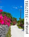 ブーゲンビリア 離島 竹富島の写真 35127381