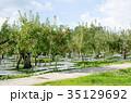 りんご 林檎 農業の写真 35129692